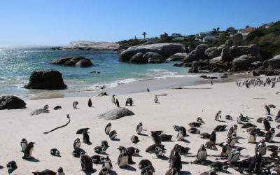 Sun, sea, sand and... penguins!
