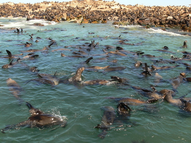 Explore the ocean on a marine safari!